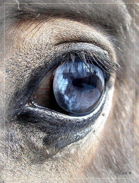 Бездонная синь глаз Арамиса