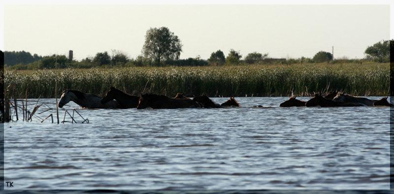 Тяга свободных лошадей к занятиям спортом:)