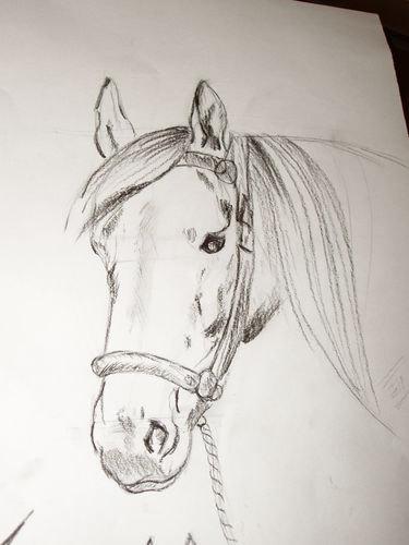 Вот на досуге пыталась что то порисовать, если у кого нибудь есть руководство  как нарисвать человека в интернете , кинте плиз ссылку...а то все лошади да лошади))))