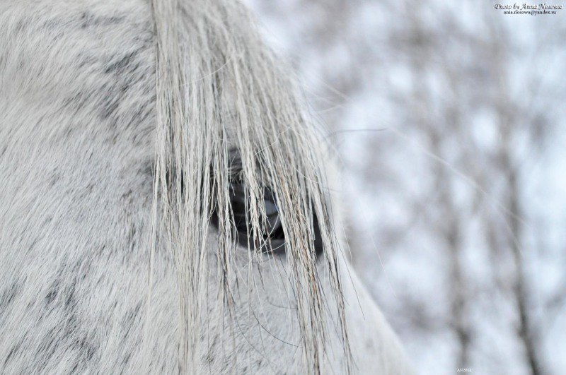 "а я всё равно вижу тебя - фотограф : D "" - Из серии ""Чудо-Лошади"", макро съёмка. Зима 2013 год"
