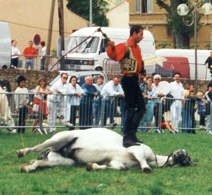 каскадёр с кнутом-отучил лошадей боятся кнута