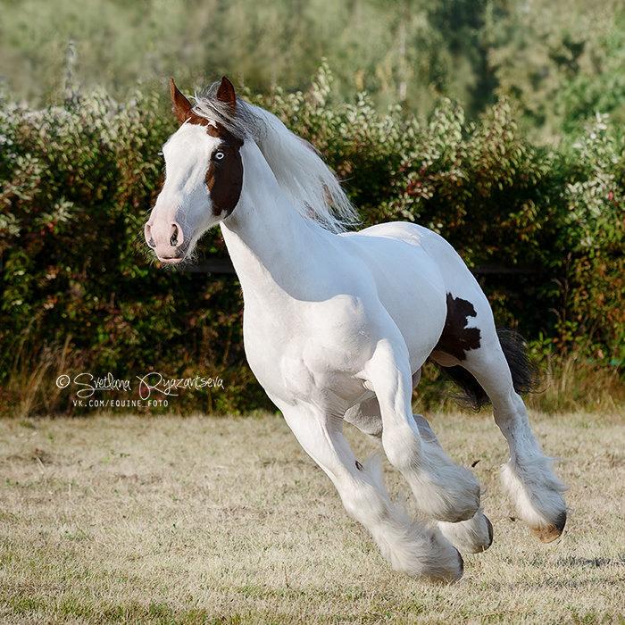 владелец - ЧК Fairytale Horse, семинар Кати Друзь в КСК Битца
