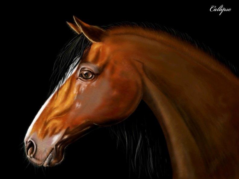 Первая лошадка в ФШ