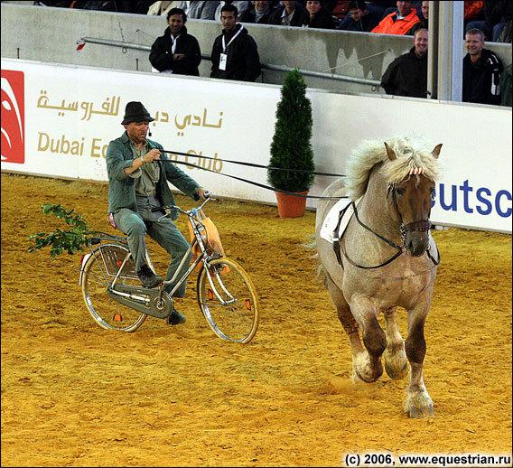 Шоу лошадей немецких пород
