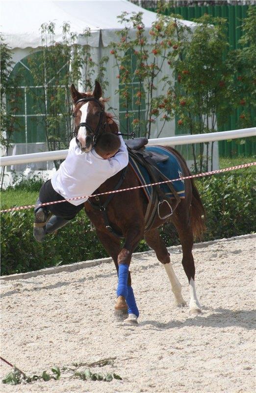 Пролезает под шеей коня