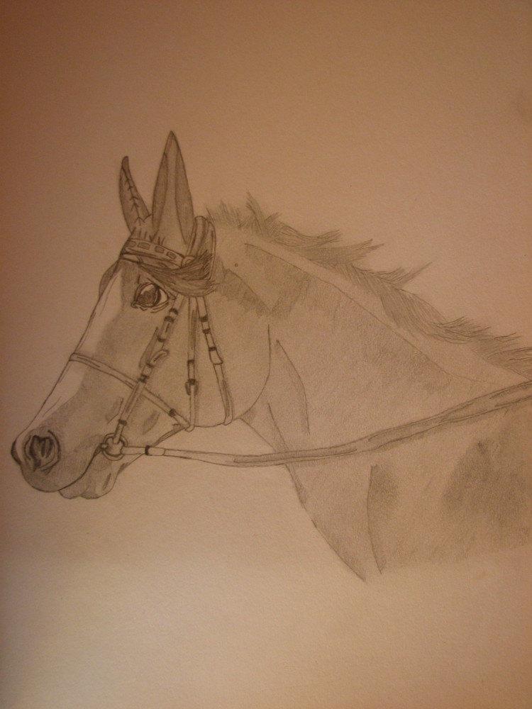 """Конь если я не ошибаюсь то Прайд нарисованный по фотографии """"Натальи Яченко"""" Заранее извиняюсь за такую вот наглость...."""