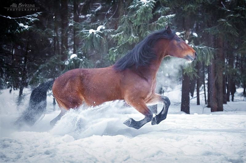 Владелец лошади Анна Володичева