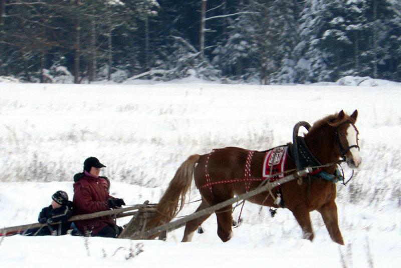 Зима пришла! Вот оно счастье! По полю и заснеженному лесу в санях!