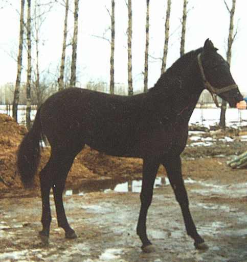 Звездопад - сын Золушки, 11 мес.