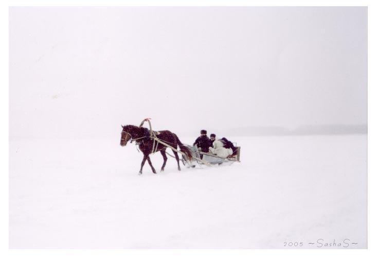 Самый красивый конь :)