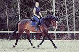 Лошадь под любителей и новичков