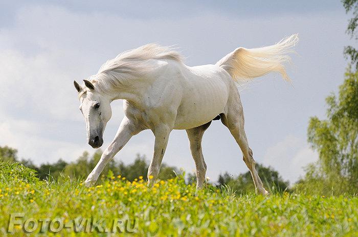 лошадь-облако
