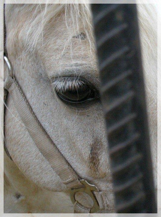 О чём думает лошадь?