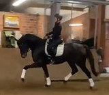 Конь с потенциалом на большой спорт