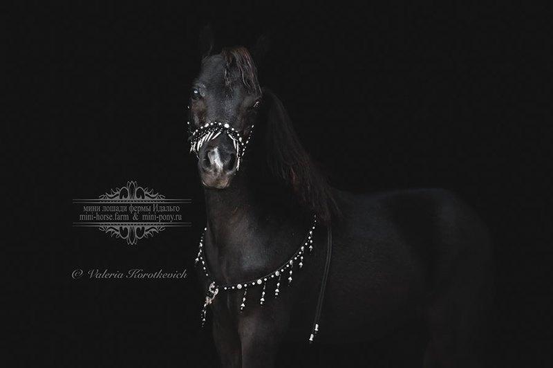 Выпускница фермы Идальго,американская миниатюрная лошадка HF Swag's Naomi. 100% Американское происхождение,сама изысканность.Шоу класс.Продается!