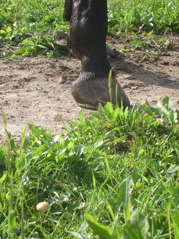 В траве лошадь может найти не только цветочки,нои грибочки