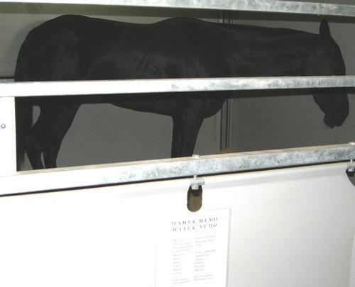 ахалтекинская порода,масть вороная,год 2004,место рождения фх немашкалов