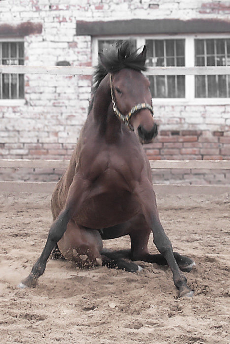 Л - значит Лошадь!