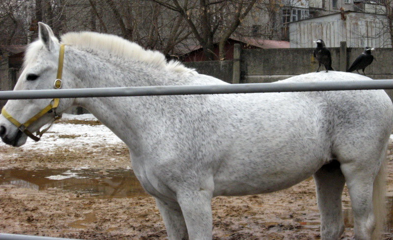 или апрельская прополка лошадей