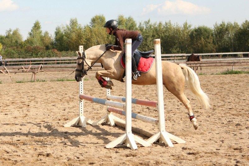 Лошадь продается.