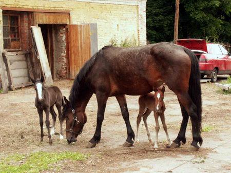 Мать с детьми на прогулке