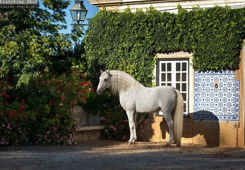 Снято во время моего семинара по конной фотографии в Португалии.