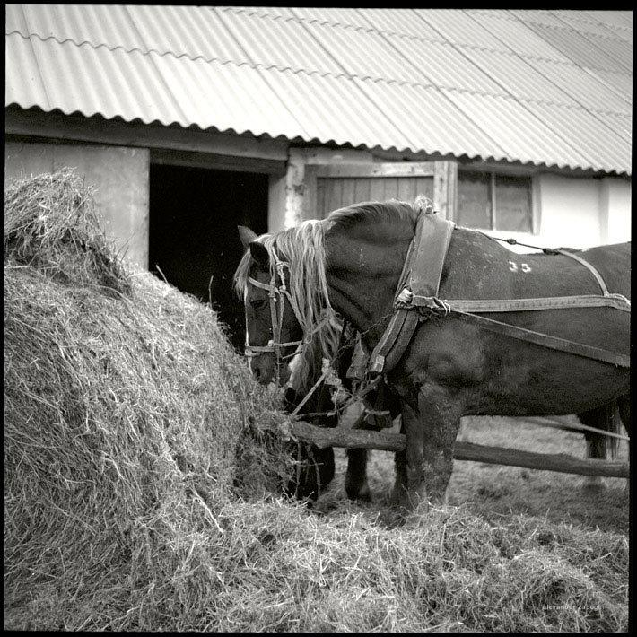 Кировский конный завод