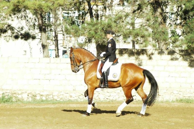 Конь гановерской породы 7 лет бегает большой приз невероятно честный и способный(ПРОДАЁТСЯ) кого интересует обращайтесь!!