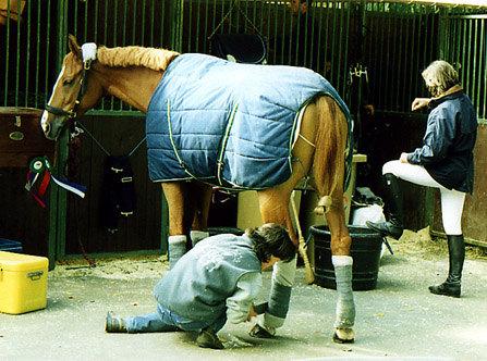 Коновод Александры Ледерманн готовит ее лошадь к соревнованиям.