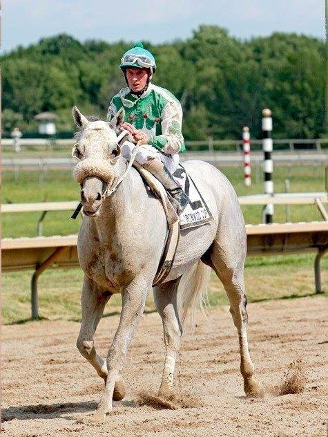 Ипподром Parx Racing 2011 год. Скачка Greenwood Cup Stakes