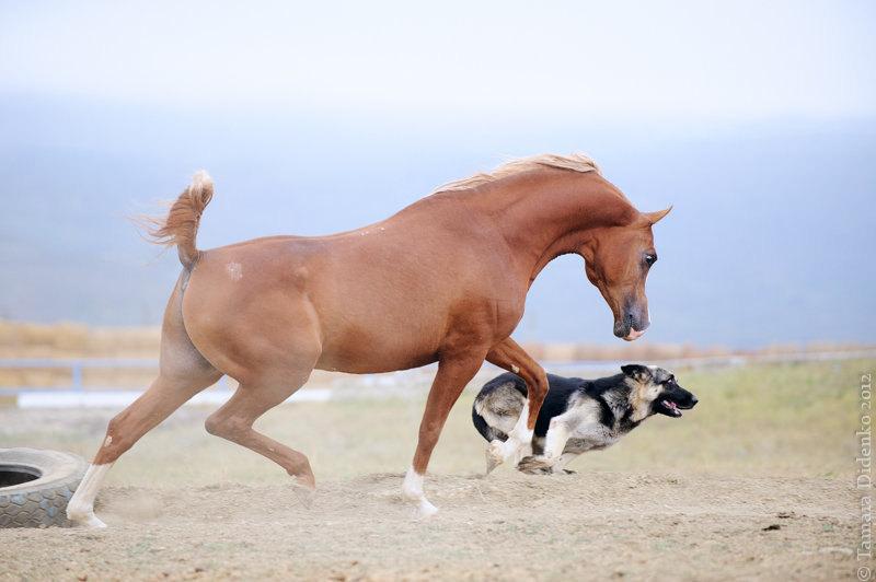 жер. Экибастуз, Терский конный завод, Мин. воды, сентябрь 2012