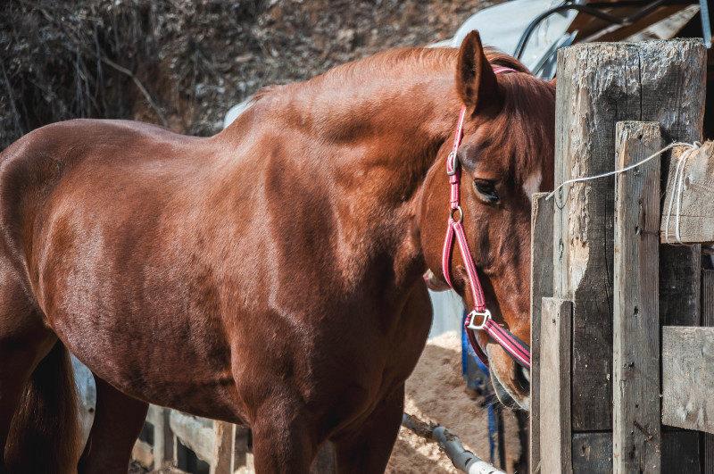 Богатырский конь Бурушка