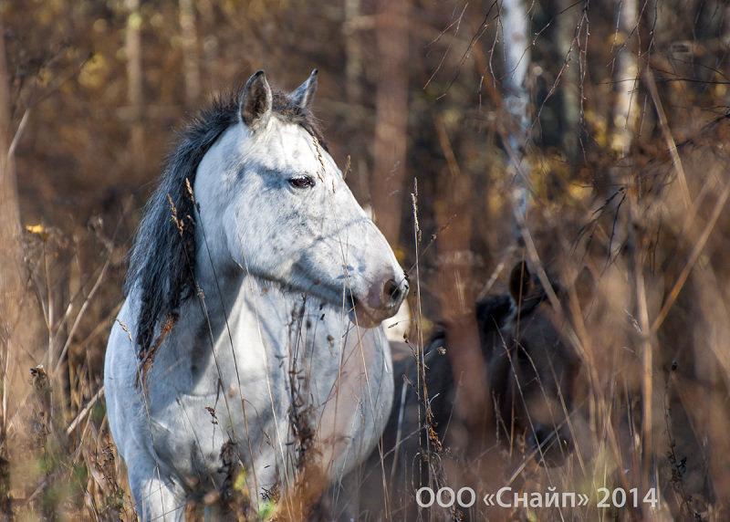 Полудикая лошадь на зимнем пастбище ООО Снайп