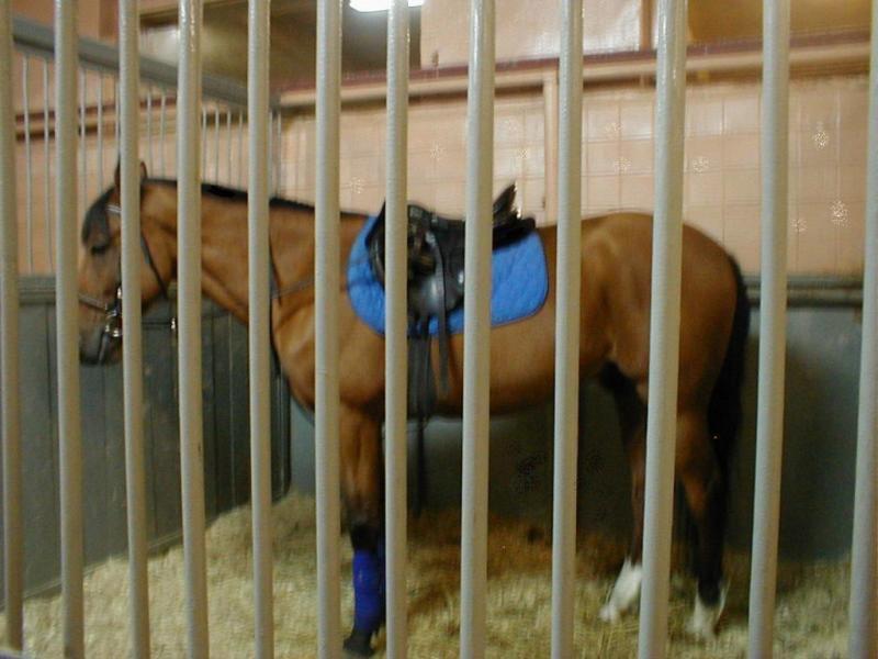 Красивый злой конь в новых бинтах...