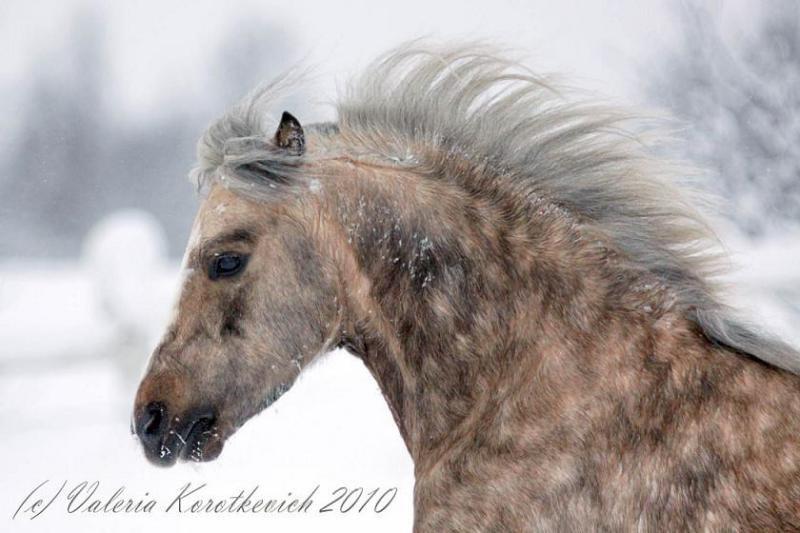 чудо-конь из сказки