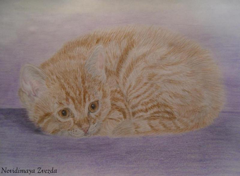 Котёнок Алиса, акварельные карандаши, нарисовано по просьбе родственников (размещено только в личном альбоме)
