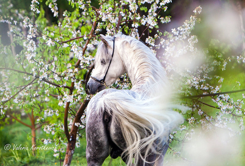 Яблочный конь в яблоневом саду