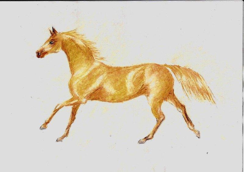вот такая вот лошадка. пастель+карандаши. моя 2 работа
