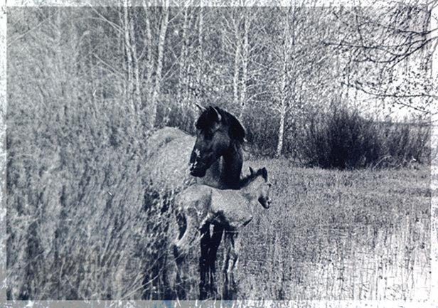Вот такую лошадку с жеребенком я нашла в старом фотоальбоме моих родителей. Качество, конечно, очень плохое, но они такие милые среди заливного луга...