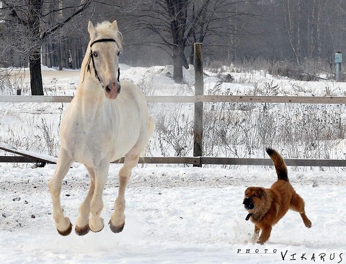 Снежок и веселый неизвестный щен