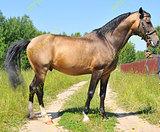 Лошадь для всей семьи (арт.4392)