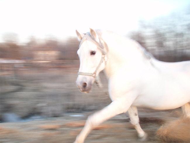 Хозяйка коня не возражает?