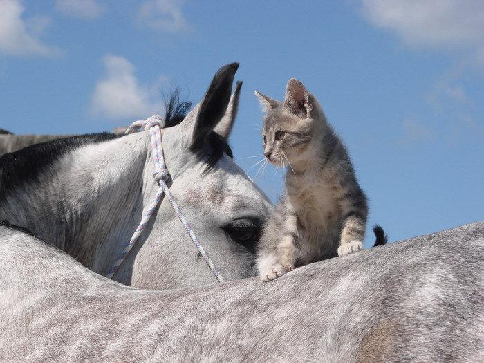 коб.Диадема и котёнок