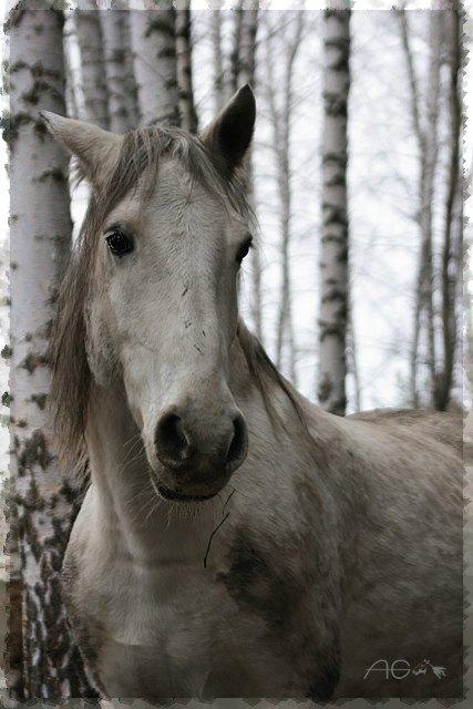 о плохой погоде и, как следствие, грязных лошадях :)))