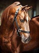 Возьму в работу лошадей в Наро-Фоминском районе.