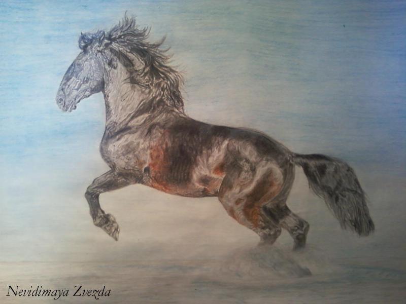 Генералиссимус Розито, акварельные и простй карандаши, формат А3. По фото Ольги Итиной - http://www.equestrian.ru/my/6521/albums/3082?photoid=181299. Качество фото плохое, не видно всех деталей.