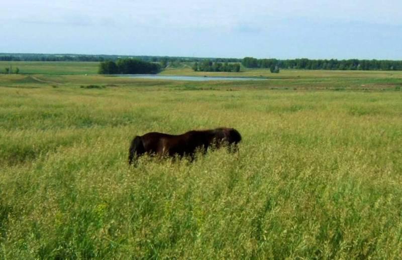 Это такая трава высокая, или такая лошадка маленькая? =))))))