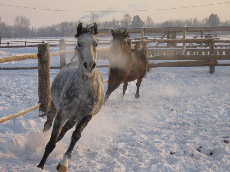 лошадки после застоя