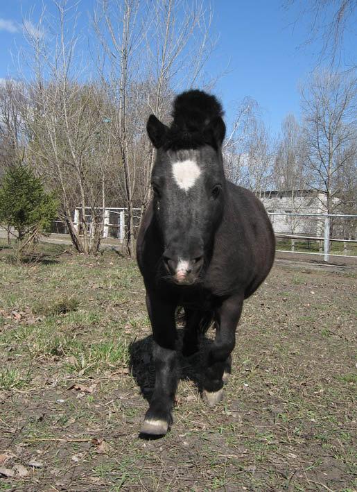 Пони тоже кони...:)