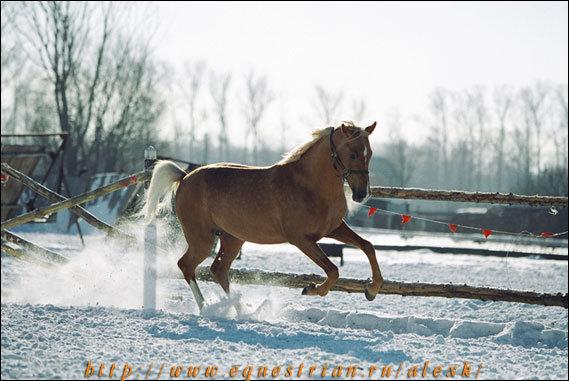 Теперь я знаю, с кого Клодт лепил своих коней! ;-)